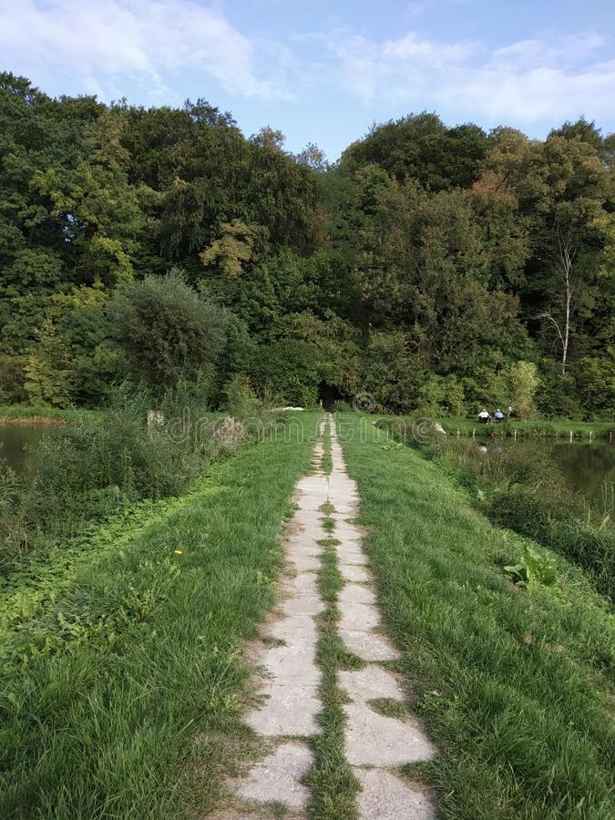 summer, path to the park, grass, trees, greens, path royalty free stock photos