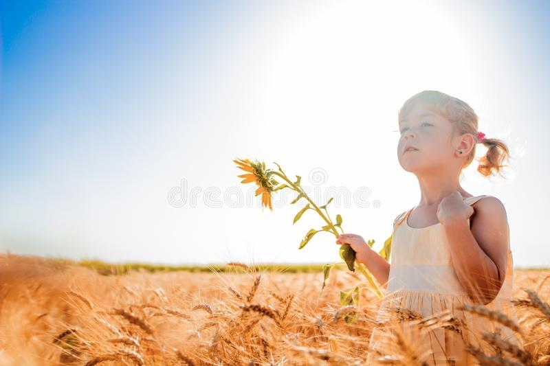 Summer photo. photo of a wheat field. little girl and wheat stock images