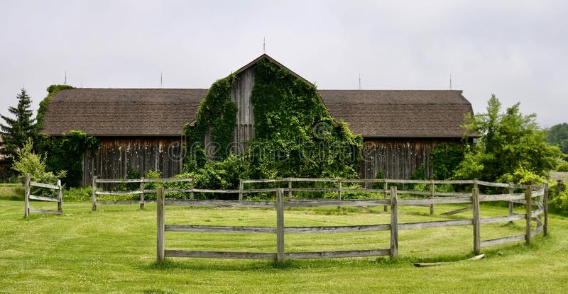 Old Barn Overgrown By Vines stock images