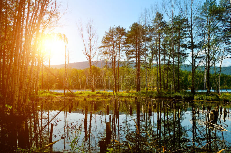 Summer picturesque landscape - mixed forest at the Saint Vera Island in Turgoyak lake, Southern Urals, Russia. Soft filter processing royalty free stock images