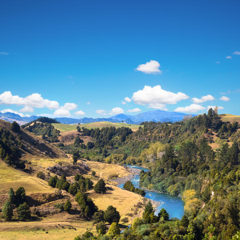 Summer picturesque landscape with the river royalty free stock images