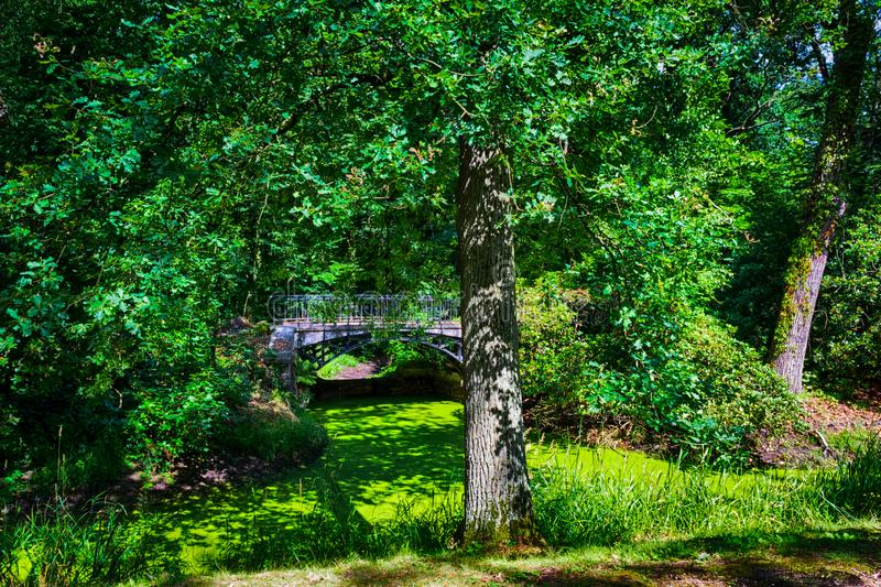 Park lit by the summer sun royalty free stock photography