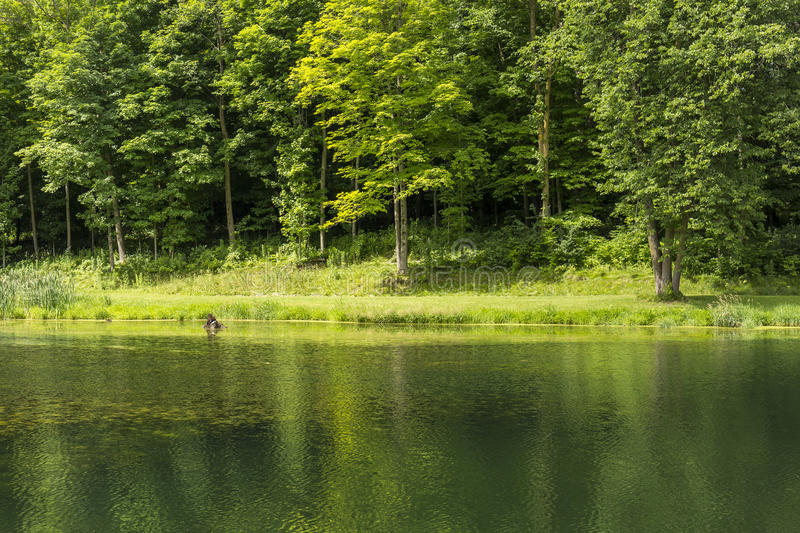 Summer Pond Scenic royalty free stock images