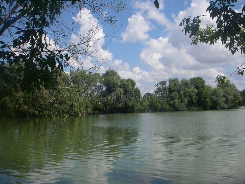 Summer pond stock photos