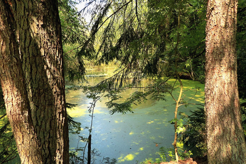 Summer pond in the woods. stock photography