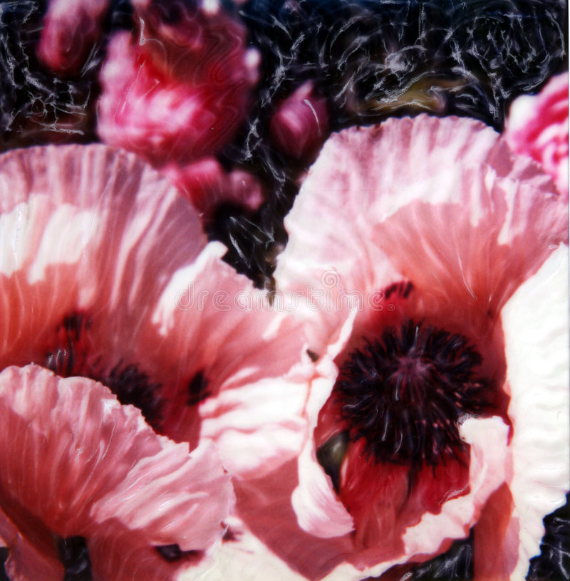 Free Summer Poppies Royalty Free Stock Photography - 212137