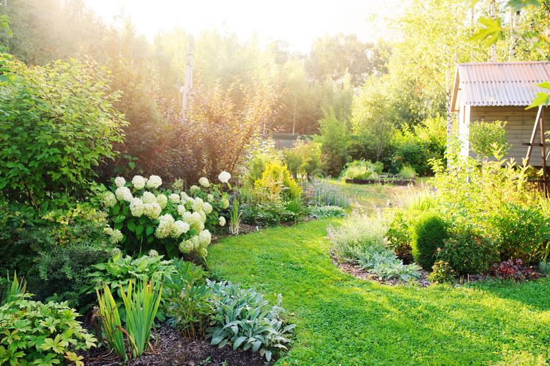 Summer private garden with blooming Hydrangea Annabelle. Curvy lawn edge, beautiful pathway. Landscape design in English cottage style royalty free stock image