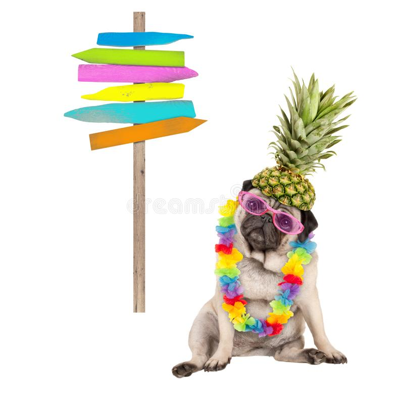 Summer pug dog sitting down with colorful hawaiian flower garland, pink sunglasses and pineapple hat, next to wooden beach sign po royalty free stock photography