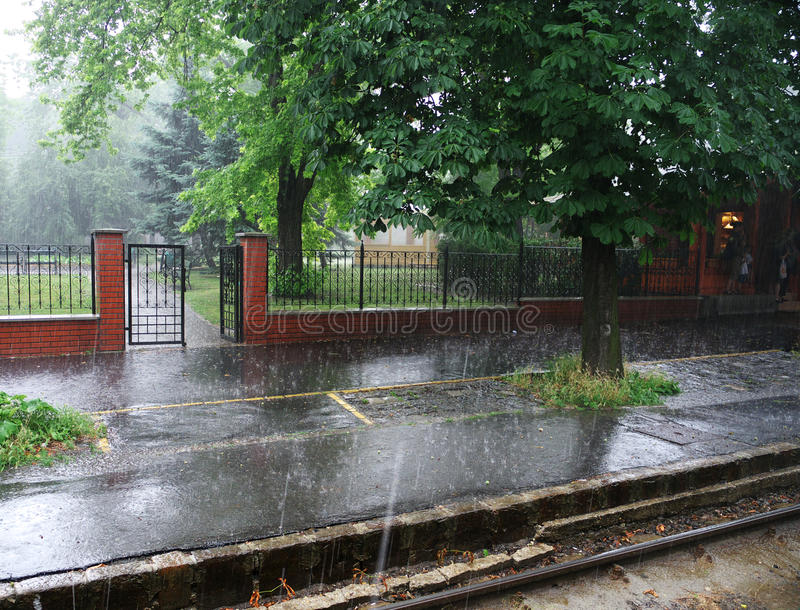 Summer rain. In the park, rain is poring royalty free stock photo