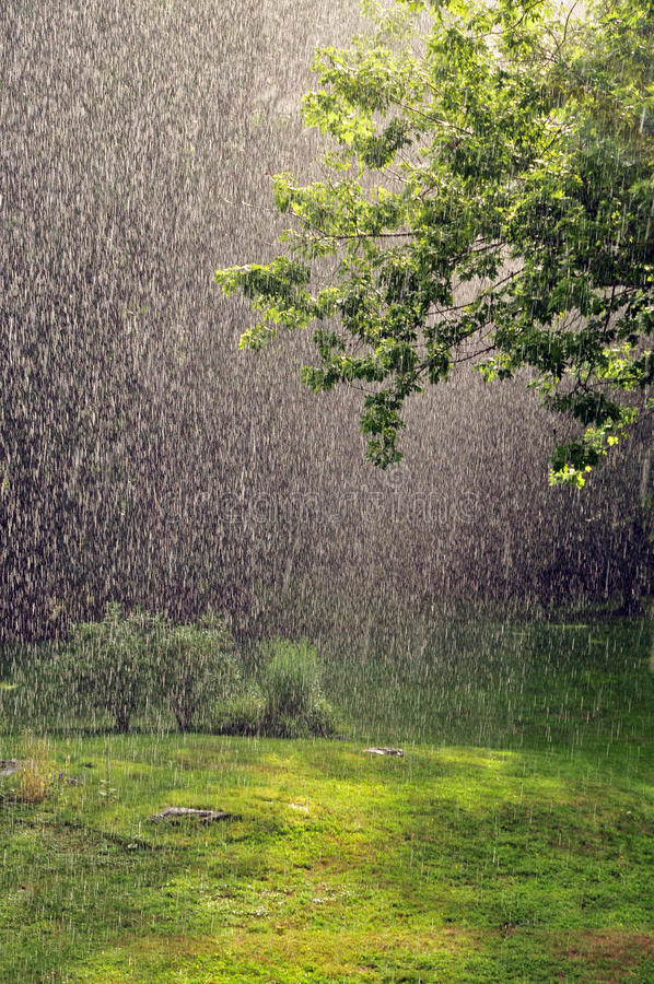 Summer Rain. Summer afternoon rain shower with sunlight coming through royalty free stock image