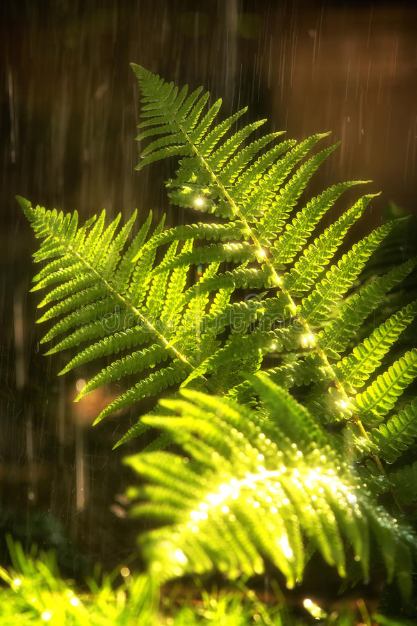Free Summer Rain Stock Image - 32083421