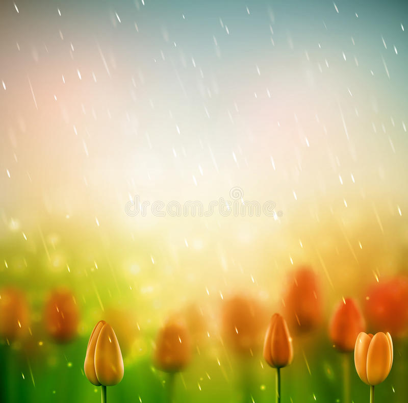 Summer rain. Background with tulips, eps 10 vector illustration