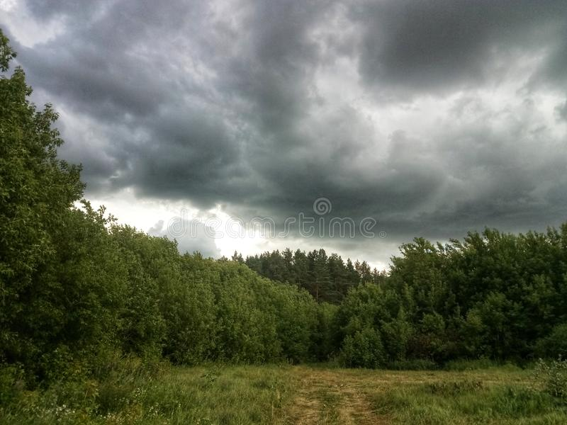 The summer before the rain forest stock images