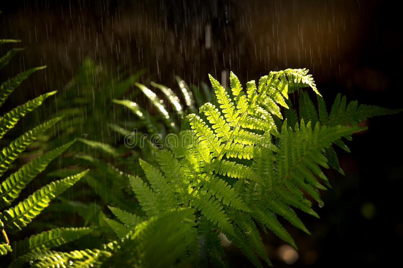 Download Summer rain stock photo. Image of fragile, downpour, fern - 32083436