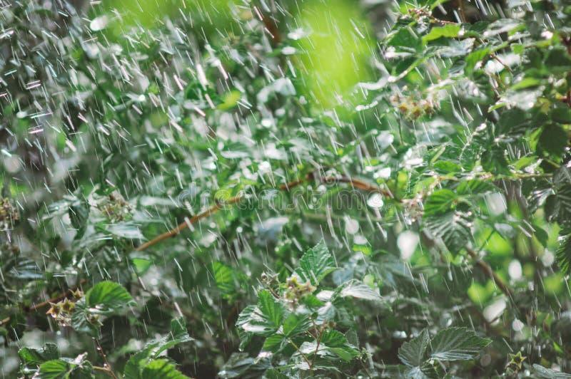 Summer rain in the garden. Beautiful summer background royalty free stock photo