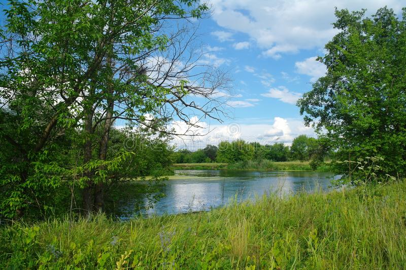Summer lake near the forest with trees. Summer river near the forest with trees royalty free stock images