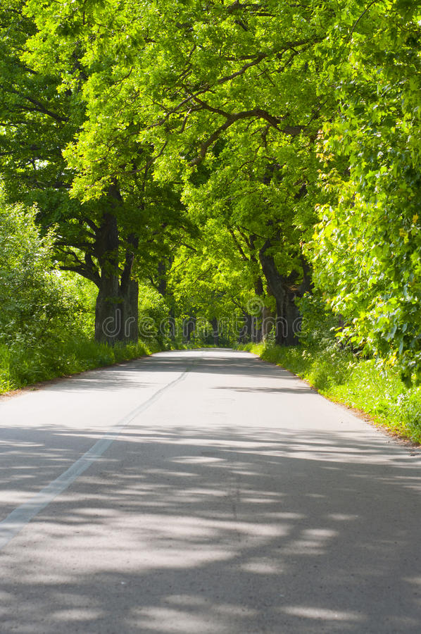Summer road. Winding tarmac road in forest region royalty free stock image