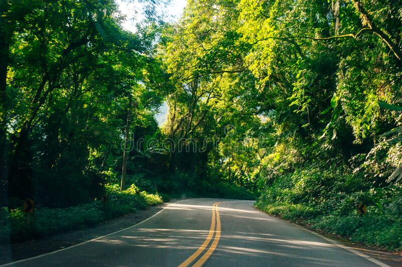 Summer road through the forest.  royalty free stock photography