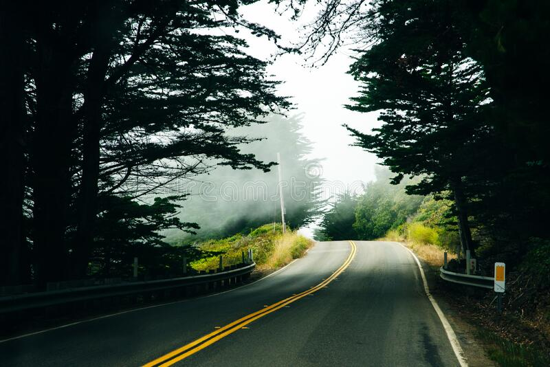 Summer road through the forest.  royalty free stock images