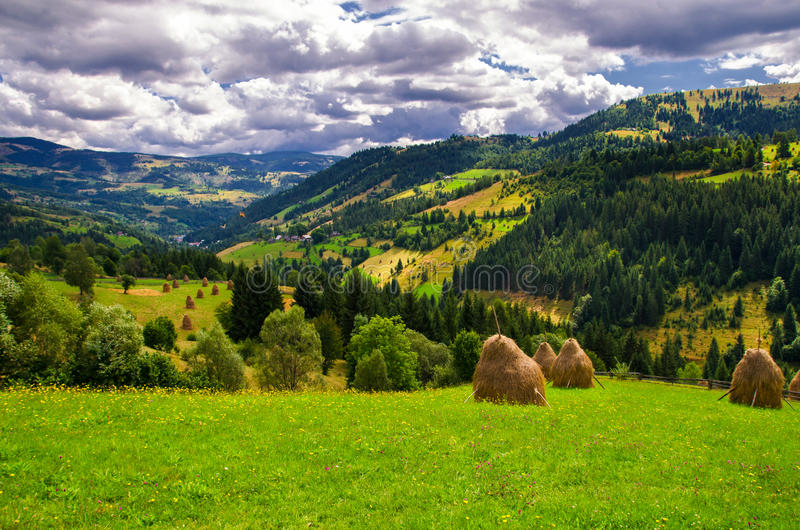 Summer in Romania. Summer colors in the mountains stock image