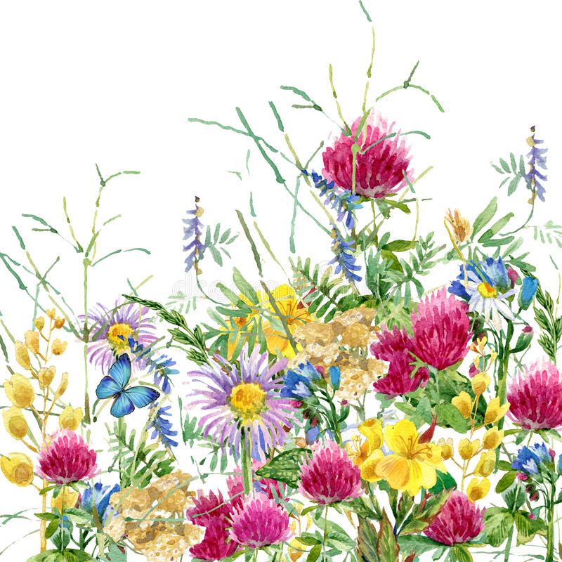 Free Summer Rural Field Herb Flowers And Butterfly Background. Watercolor Illustration Royalty Free Stock Photos - 56225188