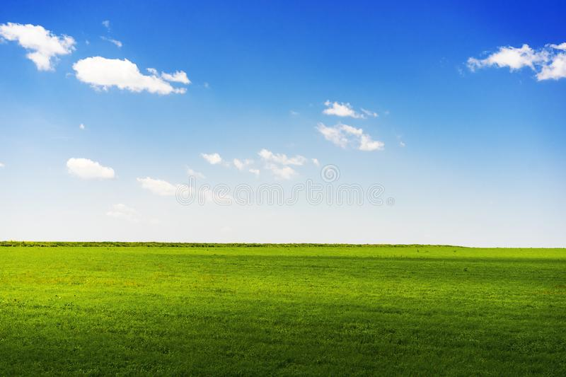 Summer rural landscape a with a field and the blue sky.  royalty free stock images