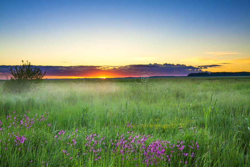 Summer rural landscape with a meadow and blossoming flowers. Scenery with sunrise, morning of new day stock photo