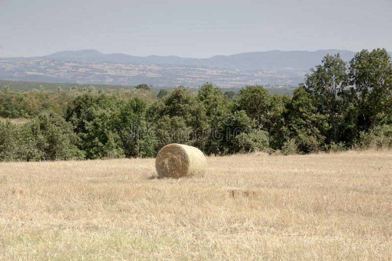 Summer rural landscape with straw rolls in the field stock images