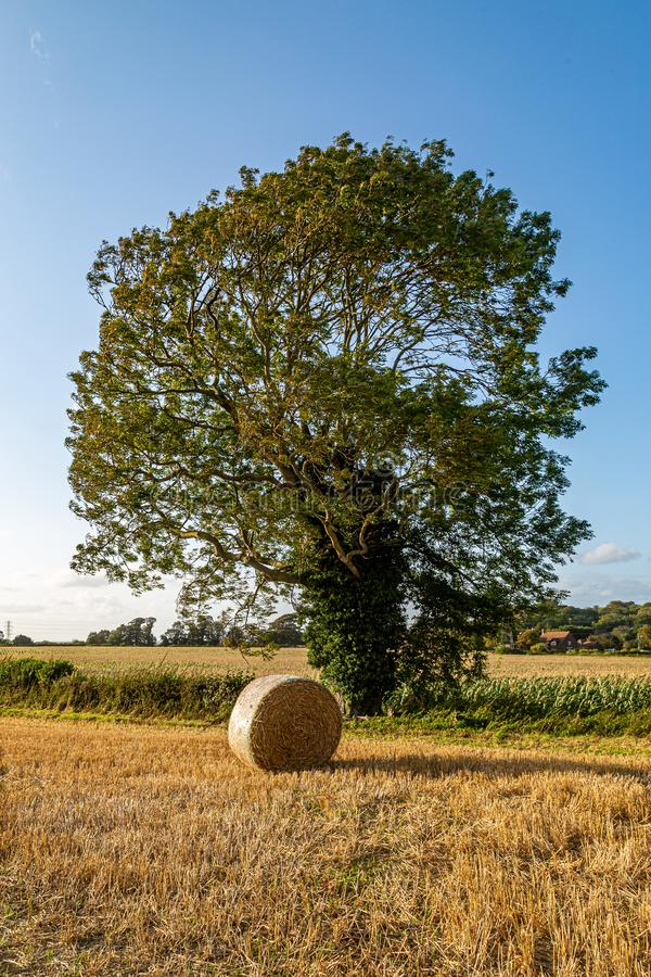 A Summer Rural Scene. A tree and a hay bale in the Sussex countryside, on a sunny summers evening royalty free stock photography