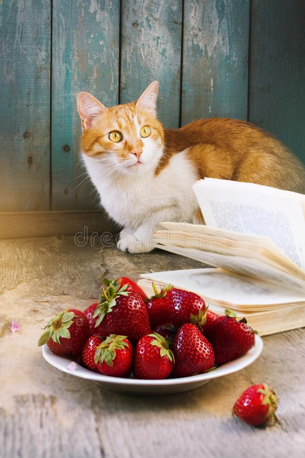 Summer rustic still life with strawberry and cat stock photos