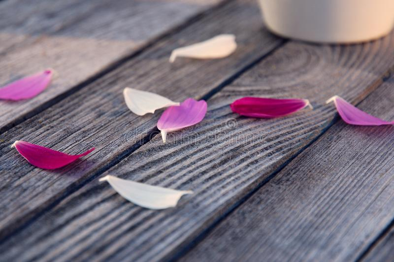 Summer`s goodbye kiss,  last warm days. Vibrant corors of flower petals on rustic gray wood stock photography