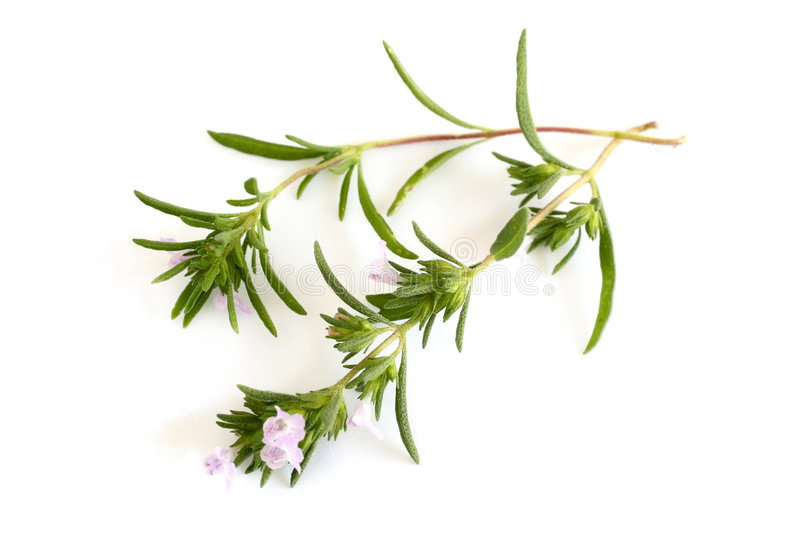 Summer savory. Isolated over white background royalty free stock photos