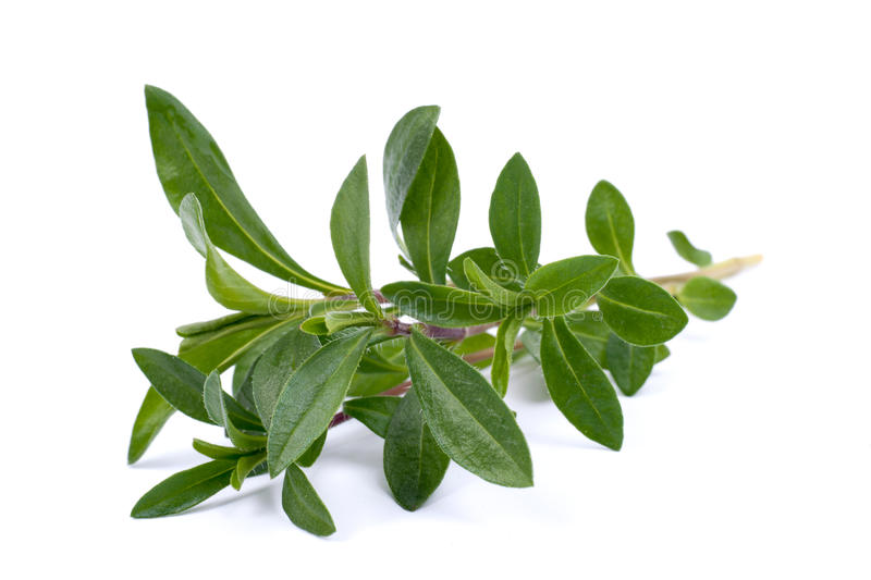 Summer savory. On white ground royalty free stock photography
