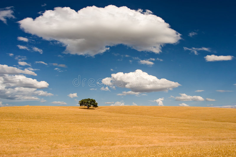 Download Summer Scene stock photo. Image of farmland, outdoor, ecological - 1705192