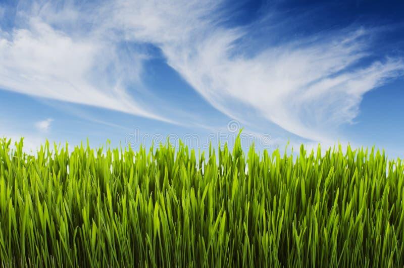 Summer scene. Long lush grass and blue summer sky stock photography