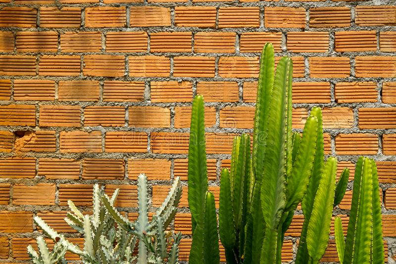 Summer scene of rough orange brick texture pattern wall and grey mortar background with fresh green and pale cactus desert plant royalty free stock photo