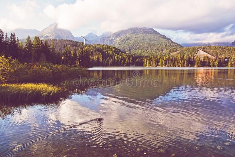 Summer scene in Strbske pleso, High Tatras, Slovakia stock image