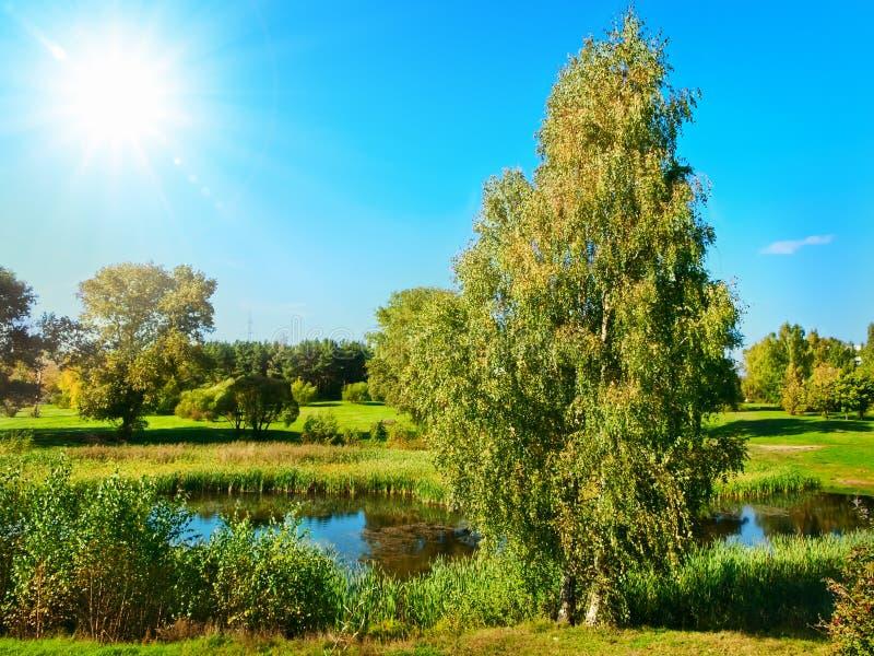 Download Summer scenery stock image. Image of spring, pond, park - 16332437