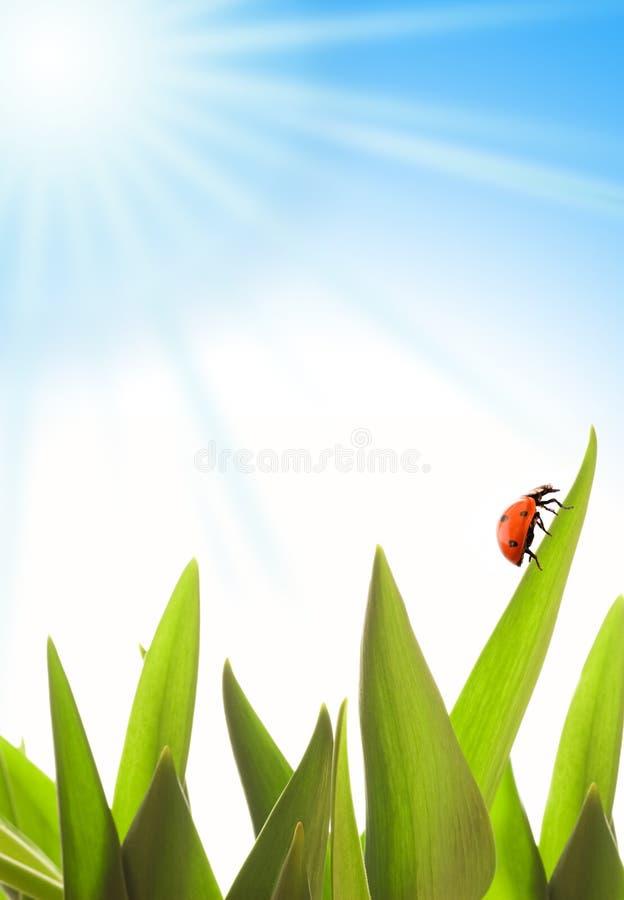 Download Summer scenic stock image. Image of beetle, garden, ladybird - 2301387