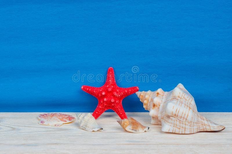 Summer sea creatures background, travel agency or vacation template. Summer sea creatures background, travel agency or vacation tour template stock images