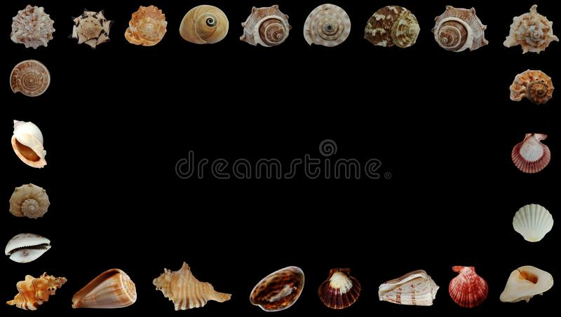 Summer sea Shells black Banner Background. Wallpaper.   book page, paintings, printing, mobile backgrounds, book, covers, screen savers, web page, landscapes stock images