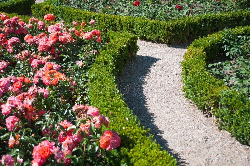 Summer season inside of a rose filled and buxus Garden royalty free stock photo