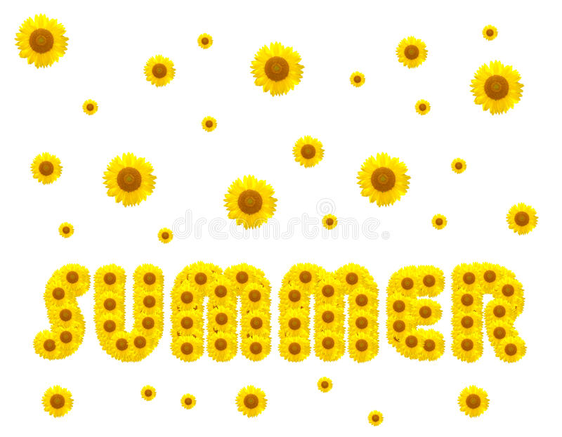Summer season with sunflowers royalty free stock photography