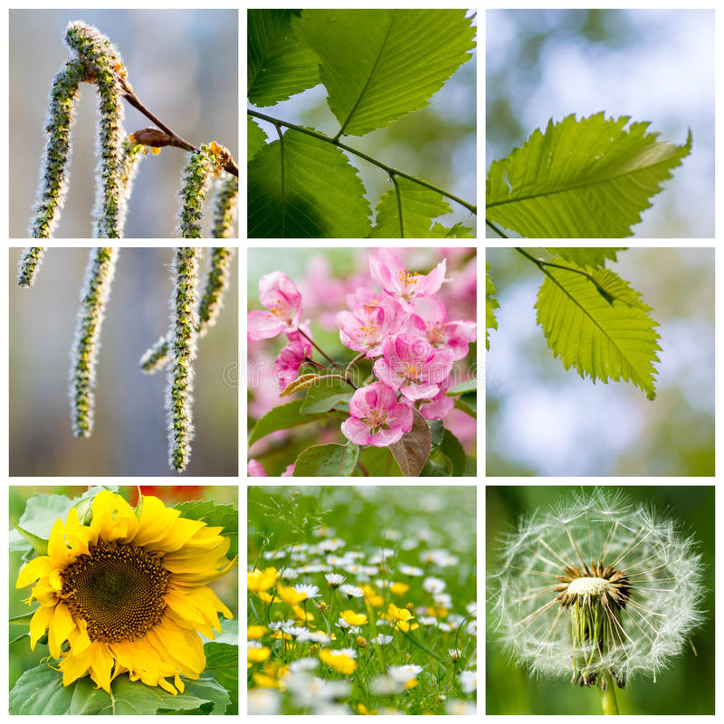 Summer shots, multiple image collage royalty free stock images