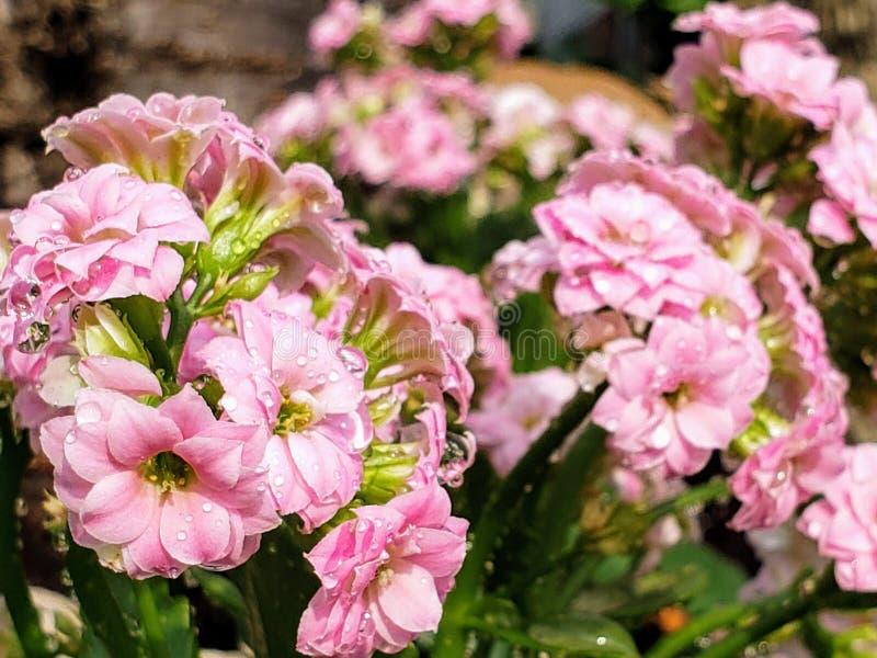 Summer showers bring wet flowers stock photo
