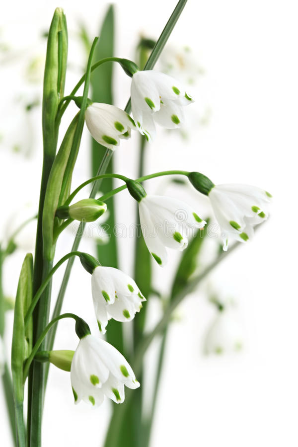 Summer Snowflake Stock Photography