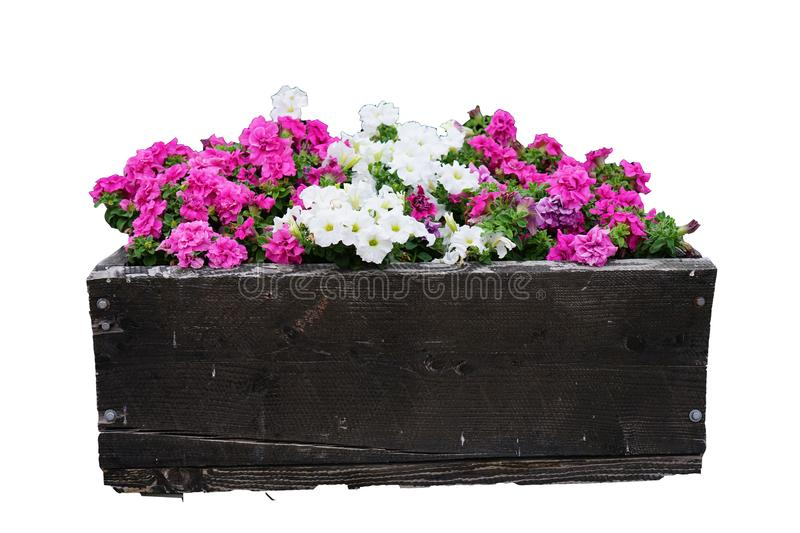 Summer / Spring flower pots isolated on a white background royalty free stock photography
