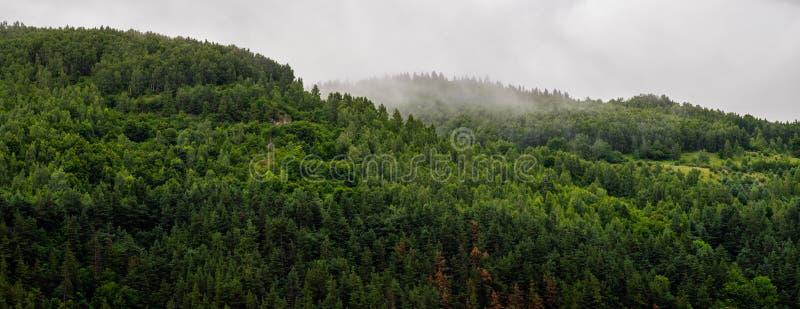Summer / spring panoramic landscape of a hill forest in Moieciu de Jos, Brasov, Transylvania, Romania.  stock photo