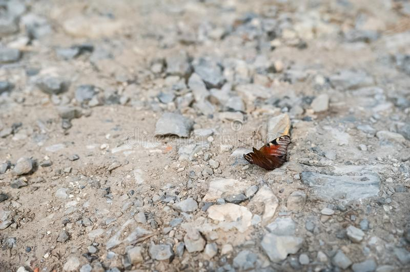 Summer and spring photo of a butterfly on a rocky ground. Beautiful multi-colored butterfly macro as background for your royalty free stock photography