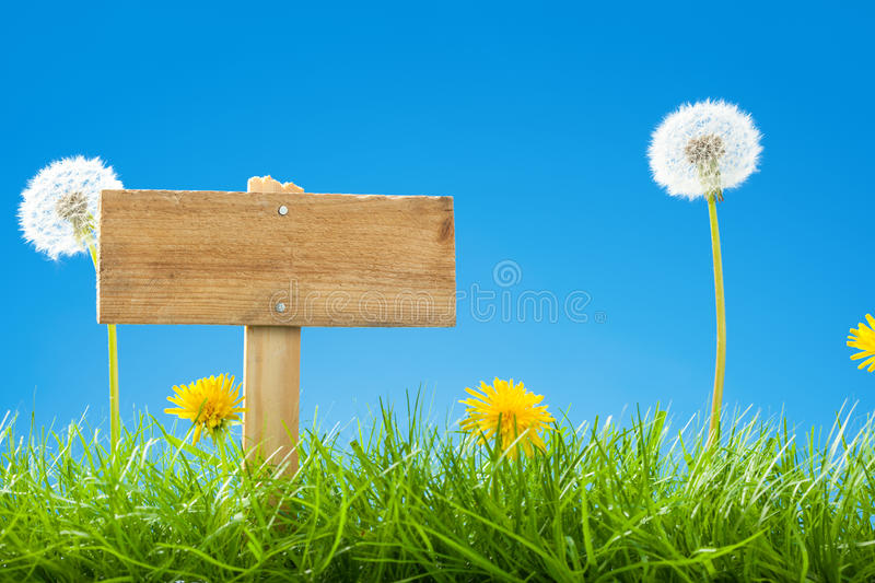 Summer / Spring Scene with Green Grass and Clear Blue Sky - Empty Wooden Sign Post and Dandelions stock image